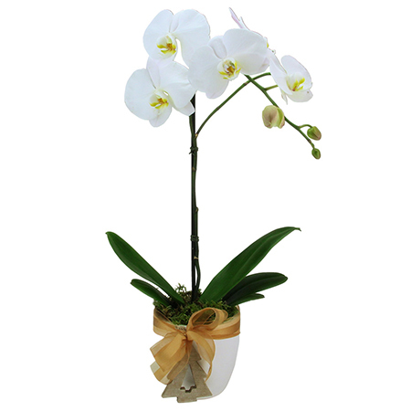 Snowflake White Phalaenopsis Orchid Plant Delivered for Xmas