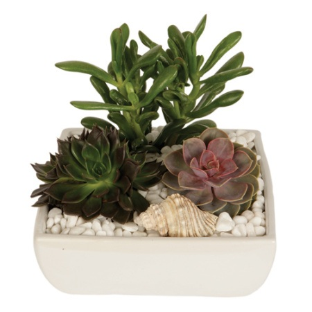 Succulents in Ceramic