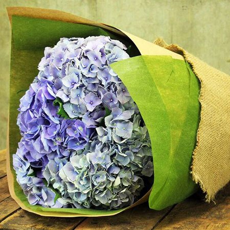 Summer Hydrangea with Free Ecoya Candle (Syd and Melb Only)