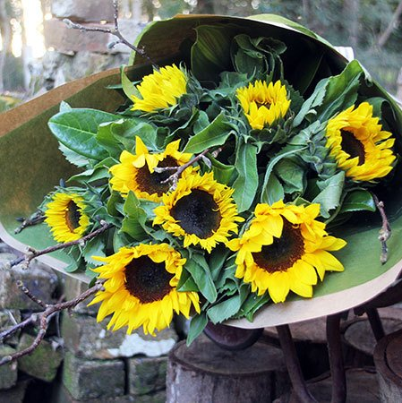 Sunflower Special with Free Ecoya Candle (Syd, Melb, Perth Only)