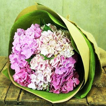Summer Pink Hydrangea (Sydney Only)