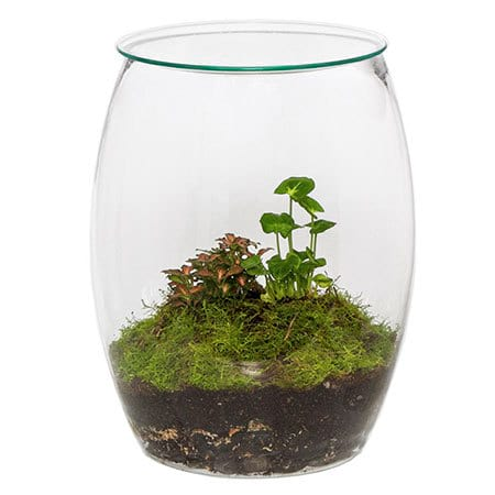 Terrarium Plant Indoor Plants Flowers For Everyone