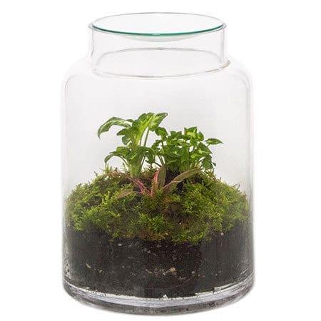 Terrarium Premium Plant Delivered Sydney