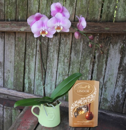 Vintage Orchid & Lindt Chocolate