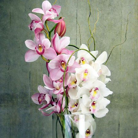 Winter Orchids in Vase