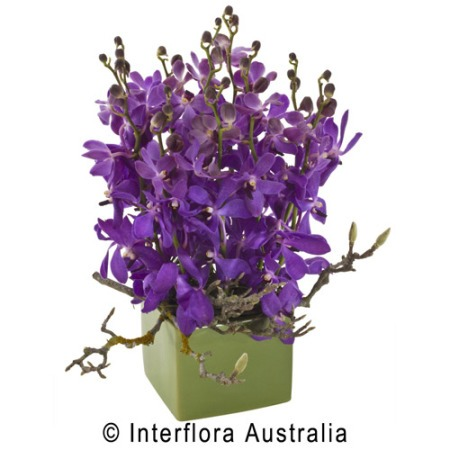 WS126 Maya Bright Orchid Arrangement in Ceramic Container