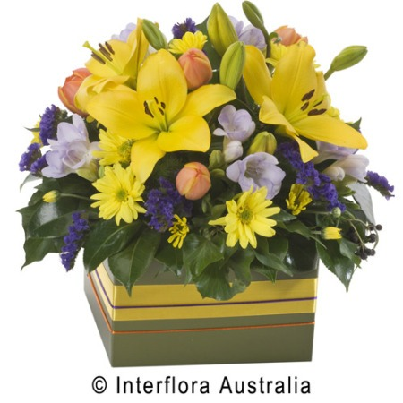 WS127 Annabelle Bright Box Arrangement of Mixed Blooms