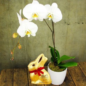 Easter gift ideas flowers and chocolate eggs delivered flowers classic orchid and lindt bunny negle Images