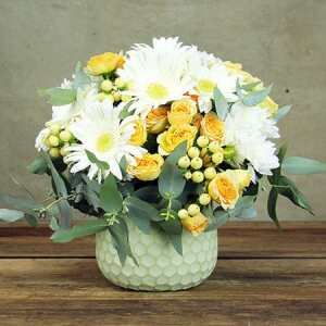 For Berry-Beautiful Mums Mothers Day flowers