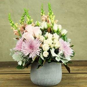 Pastel Pink Chrysanthemums For Mellow Mums