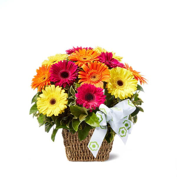Fresh Gerbera Basket Of Flowers Delivered