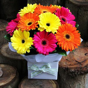 Gerbera Box (Brisbane Only)