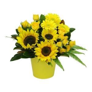 HOS-SUNPOT - Sunflower Pot