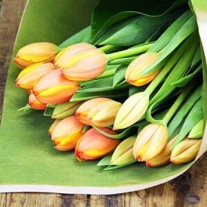 I Heart Tulips (Bright)