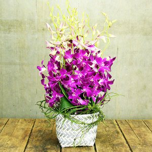 Lush Orchid Basket (Sydney Only)