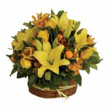 Florist Delivery Australia : Affordable Flower Delivery Australia