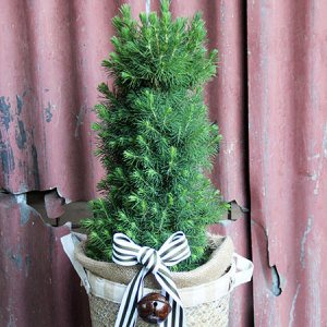 Mini Fir Tree & Warm Bonfire Nights: Sydney Only