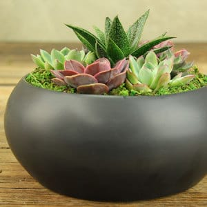 Modern Succulents in Black Ceramic Bowl Delivered in Sydney