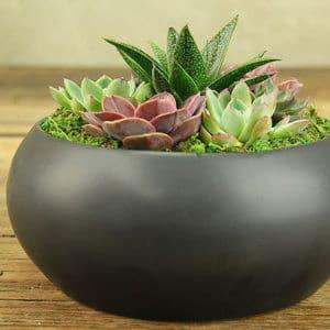 Modern Succulents in Black Ceramic Bowl Delivered in Sydney