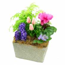 Christmas Flower Delivery : Affordable Flower Delivery Australia