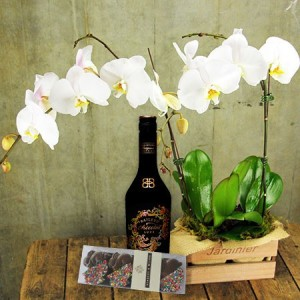 Orchids, Liqueur and Easter Bunnies (Sydney Only)