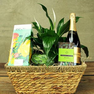Peace Lily Gift Hamper