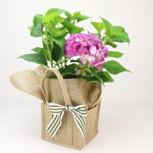 Pink Hydrangea Gift Bag