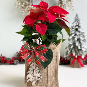 Poinsettia Gift Bag