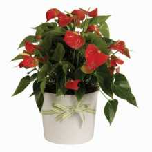 Florist On Line : Australia Flowers Online