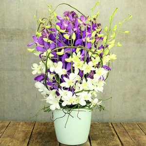 Purple and White Orchid Pot