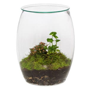 Terrarium Plant Delivered in Sydney