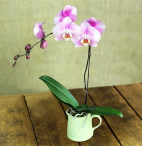 Vintage Orchid