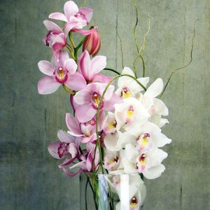 Winter Orchids in Vase (Sydney Only)