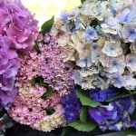 Hydrangea in the Flowers for Everyone Sydney floral workshop. Send flowers online.