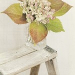 Pale, pale green hydrangea with speckled pink petals. So vintage. Online florists. Send Flowers in Australia.