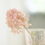 Pale pink panicle head hydrangea in crystal vase. Online flower delivery.