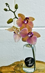 Orchid in bud vase