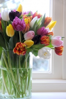 Classic cylindrical vase of tulips