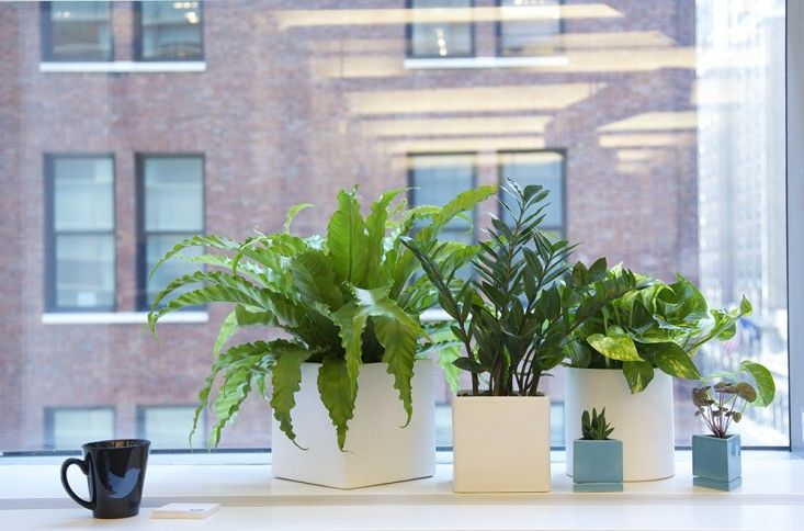 Beautiful looking plants for the office