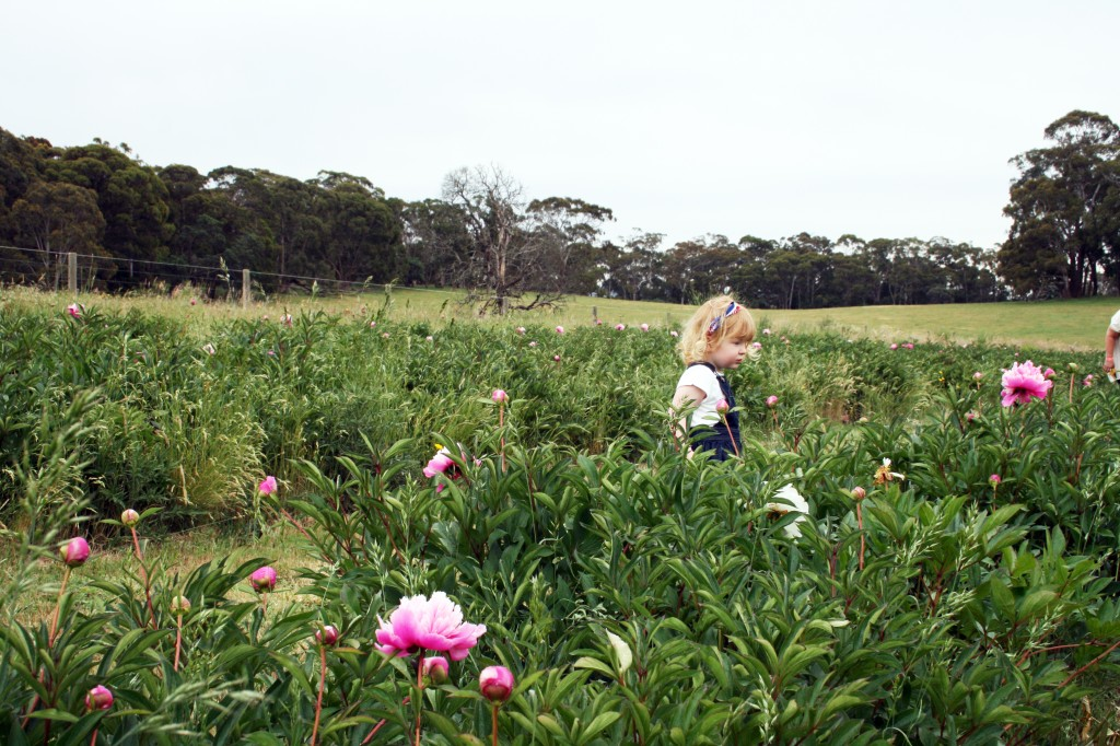 charlotte in the peony farm