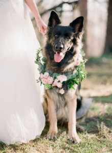 bridal flowers for dogs