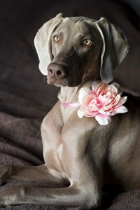 dog collar with flowers