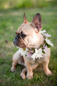 floral collars for dogs