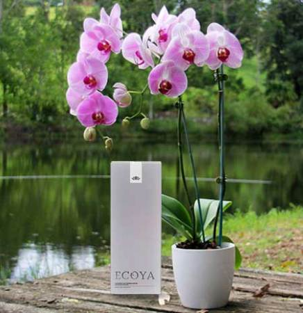 orchid-love-and-ecoya-reed-diffuser