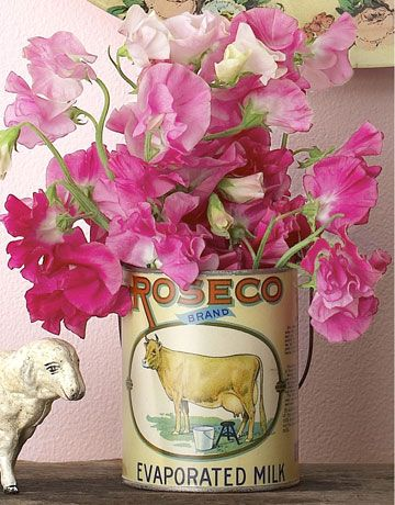 pink sweet peas in vintage can
