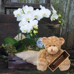 orchids and teddy bear