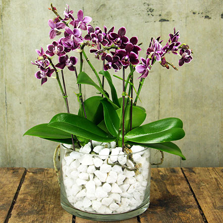 Orchid-bowl